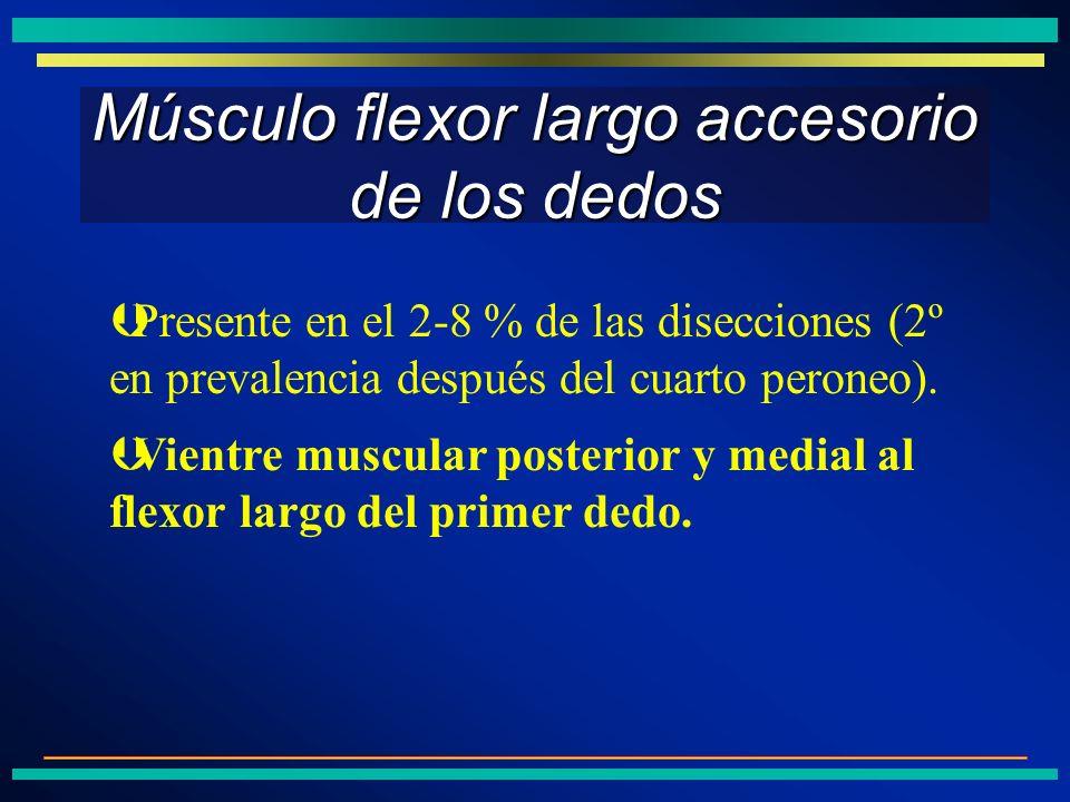 Músculo flexor largo accesorio de los dedos