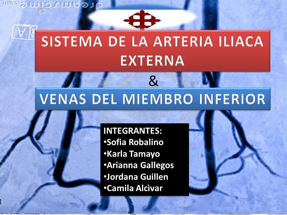 SISTEMA DE LA ARTERIA ILIACA EXTERNA VENAS DEL MIEMBRO INFERIOR