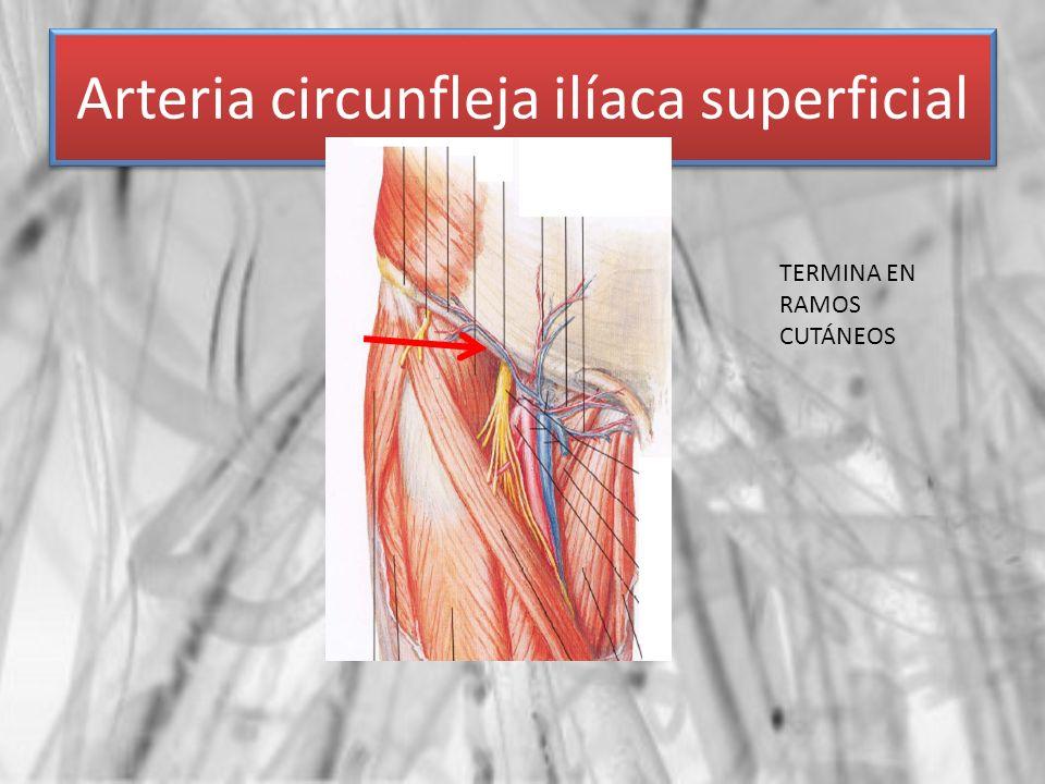 Arteria circunfleja ilíaca superficial