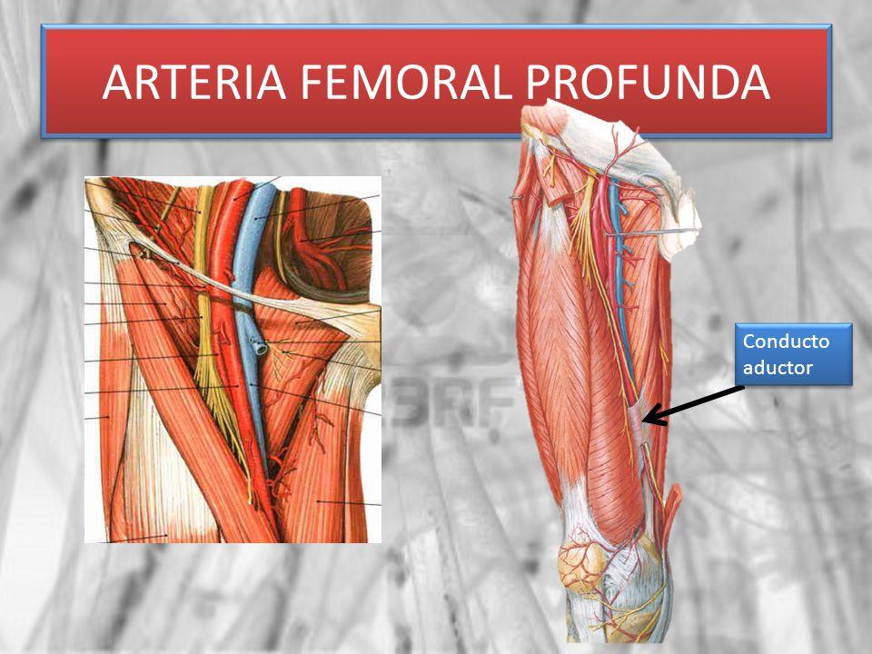 ARTERIA FEMORAL PROFUNDA