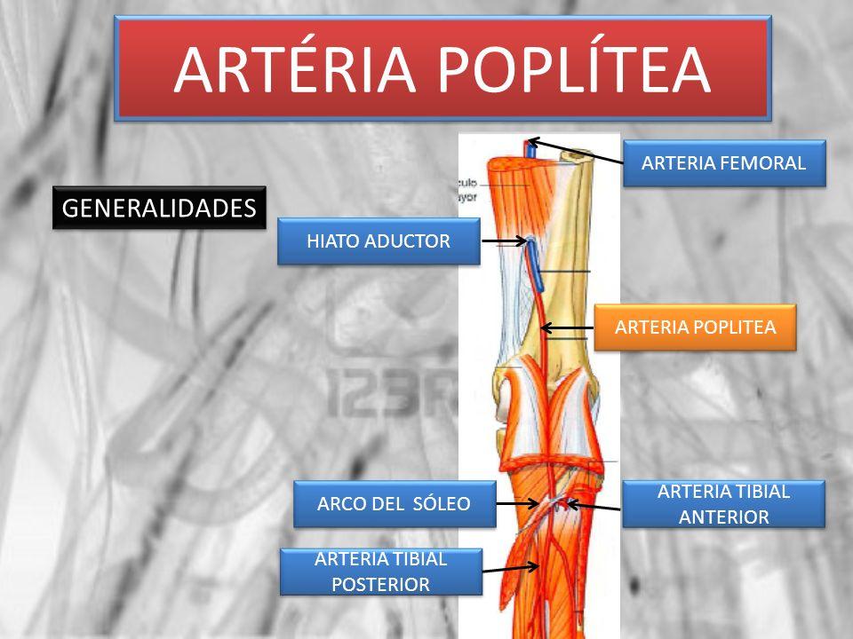 ARTÉRIA POPLÍTEA GENERALIDADES ARTERIA FEMORAL HIATO ADUCTOR