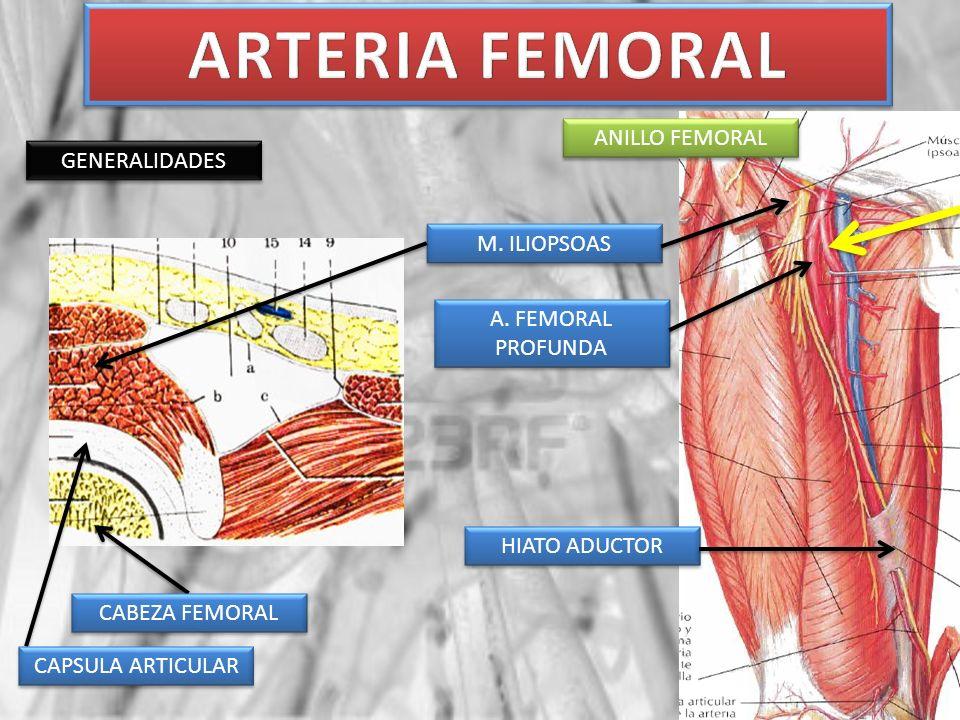 ARTERIA FEMORAL ANILLO FEMORAL GENERALIDADES M. ILIOPSOAS
