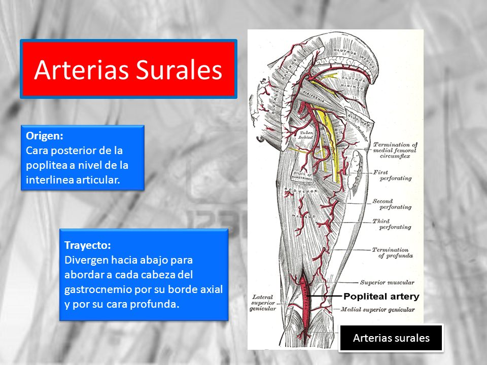 Arterias Surales Origen: