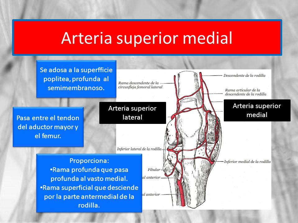 Arteria superior medial