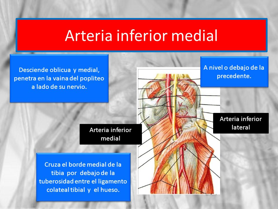 Arteria inferior medial