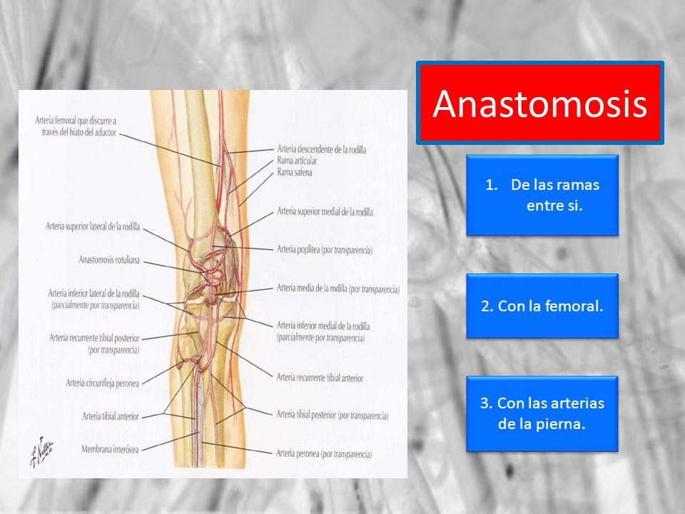 3. Con las arterias de la pierna.