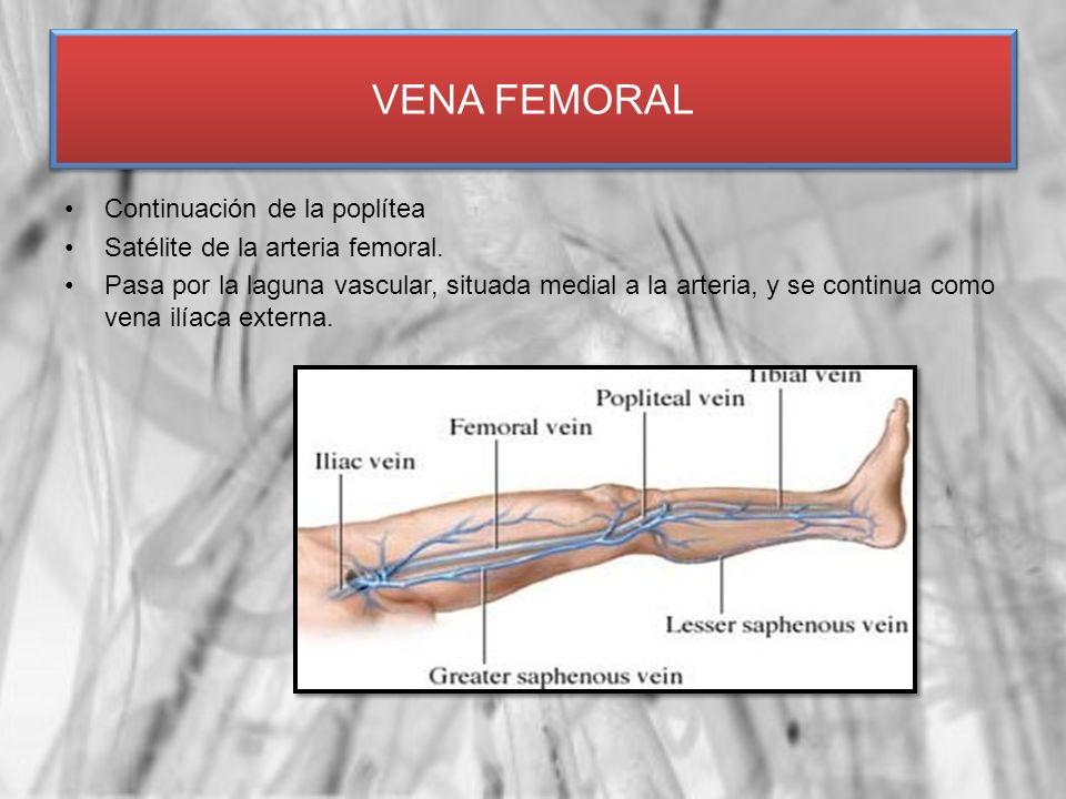 VENA FEMORAL Continuación de la poplítea