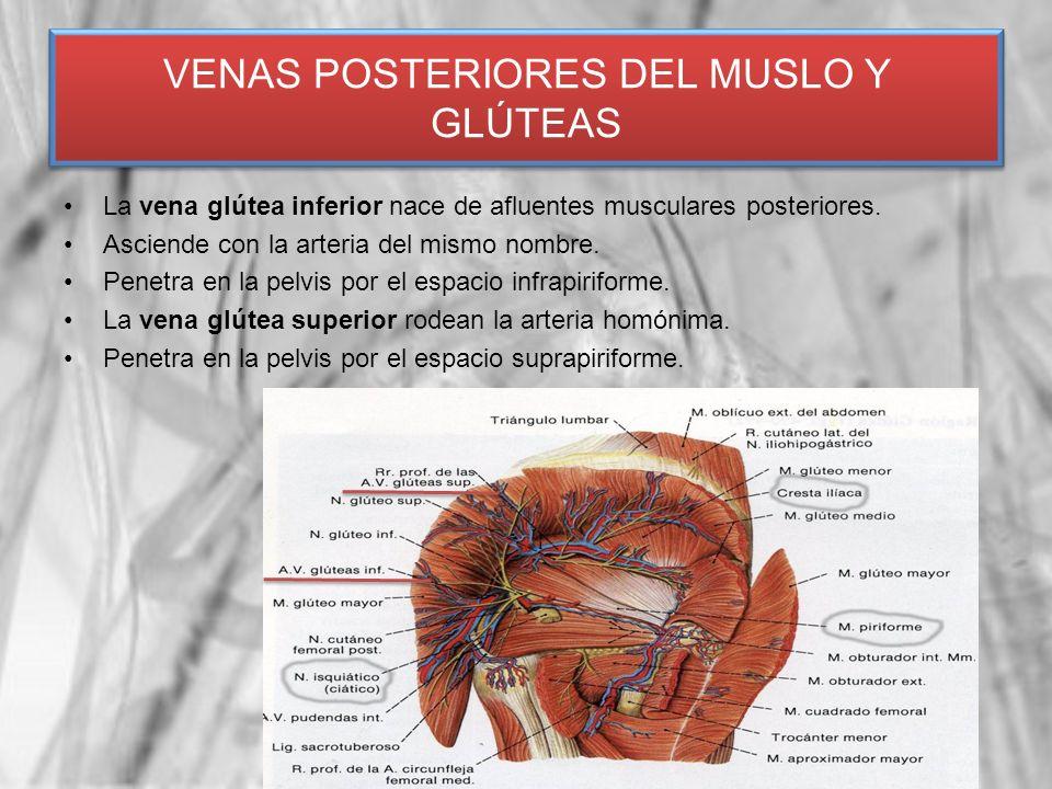 VENAS POSTERIORES DEL MUSLO Y GLÚTEAS
