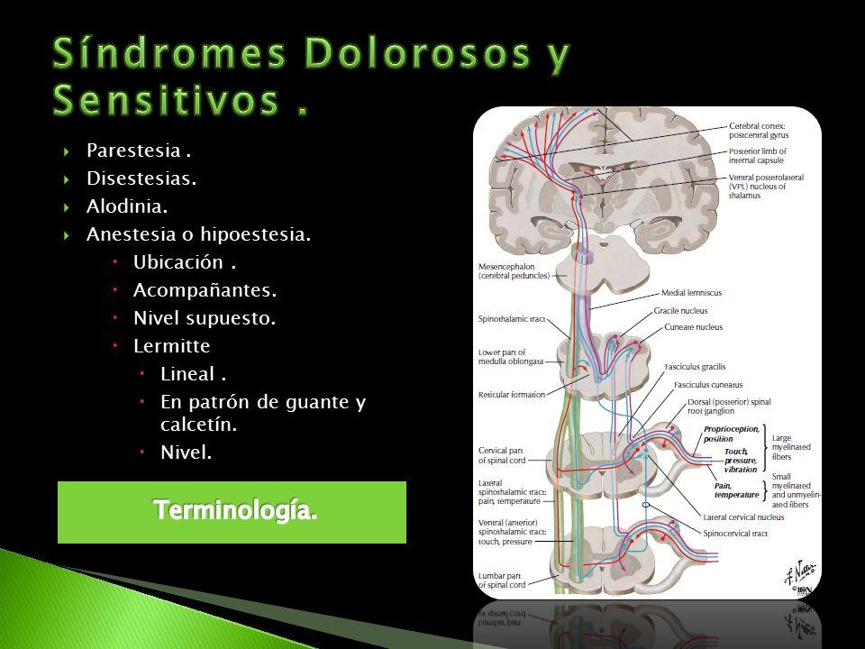 Síndromes Dolorosos y Sensitivos .