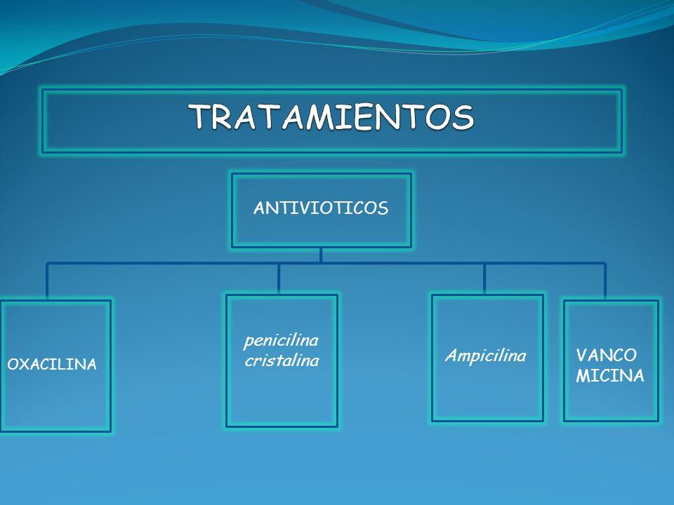 TRATAMIENTOS ANTIVIOTICOS penicilina cristalina Ampicilina VANCOMICINA