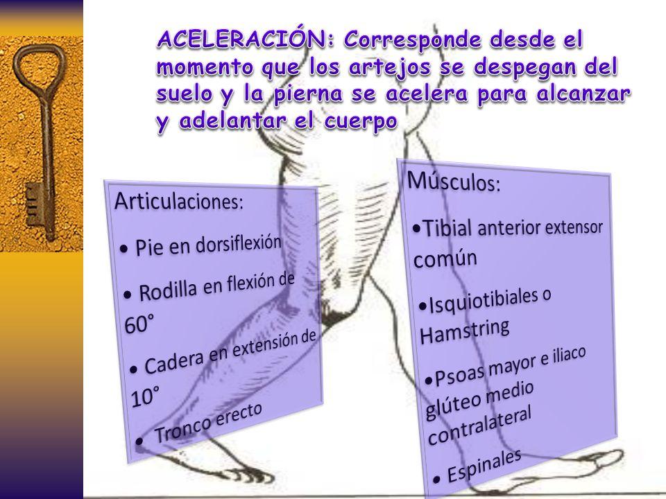 ACELERACIÓN: Corresponde desde el momento que los artejos se despegan del suelo y la pierna se acelera para alcanzar y adelantar el cuerpo