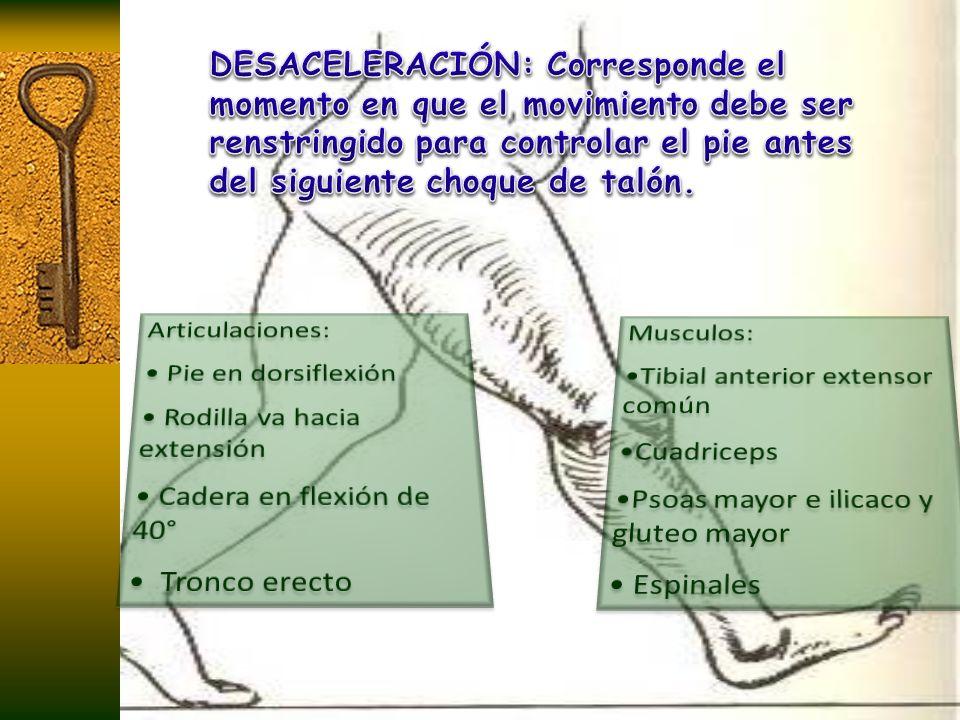 DESACELERACIÓN: Corresponde el momento en que el movimiento debe ser renstringido para controlar el pie antes del siguiente choque de talón.