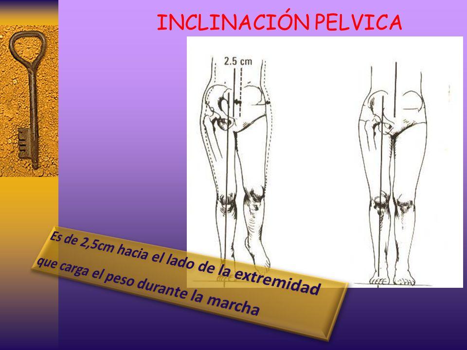 INCLINACIÓN PELVICA Es de 2,5cm hacia el lado de la extremidad