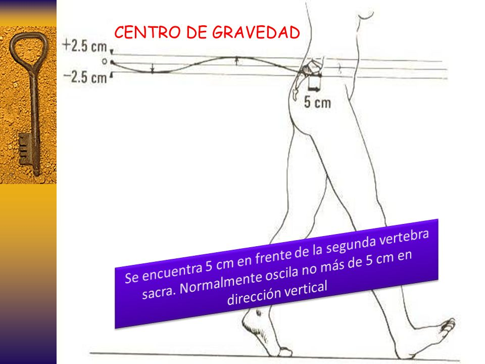 CENTRO DE GRAVEDAD Se encuentra 5 cm en frente de la segunda vertebra sacra.