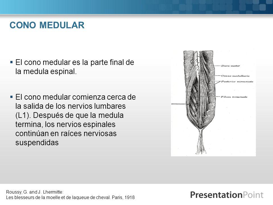 CONO MEDULAR El cono medular es la parte final de la medula espinal.