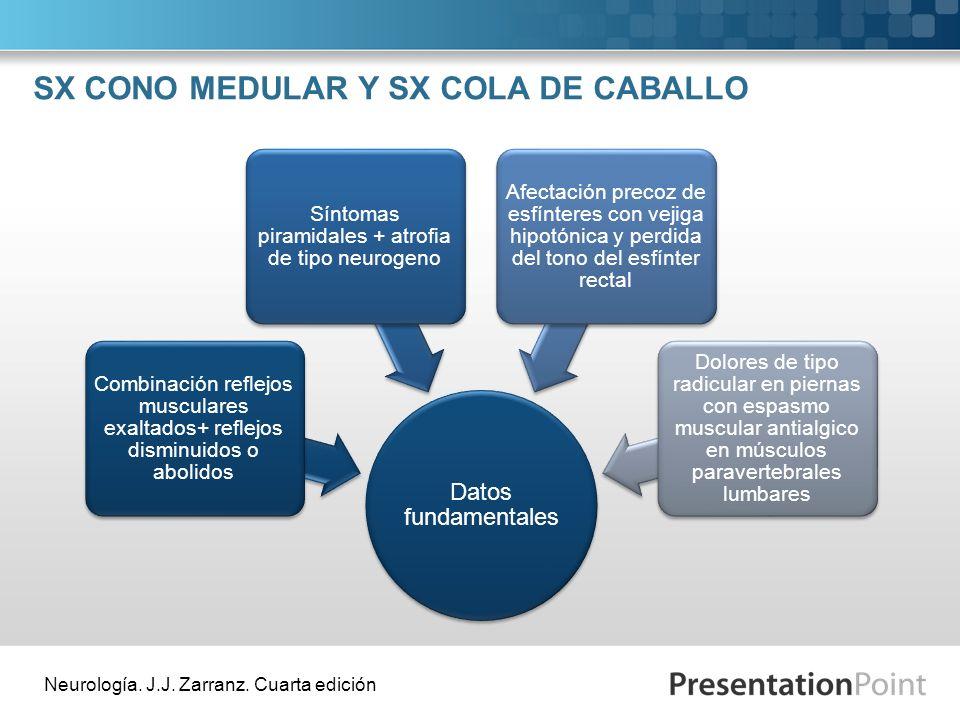SX CONO MEDULAR Y SX COLA DE CABALLO