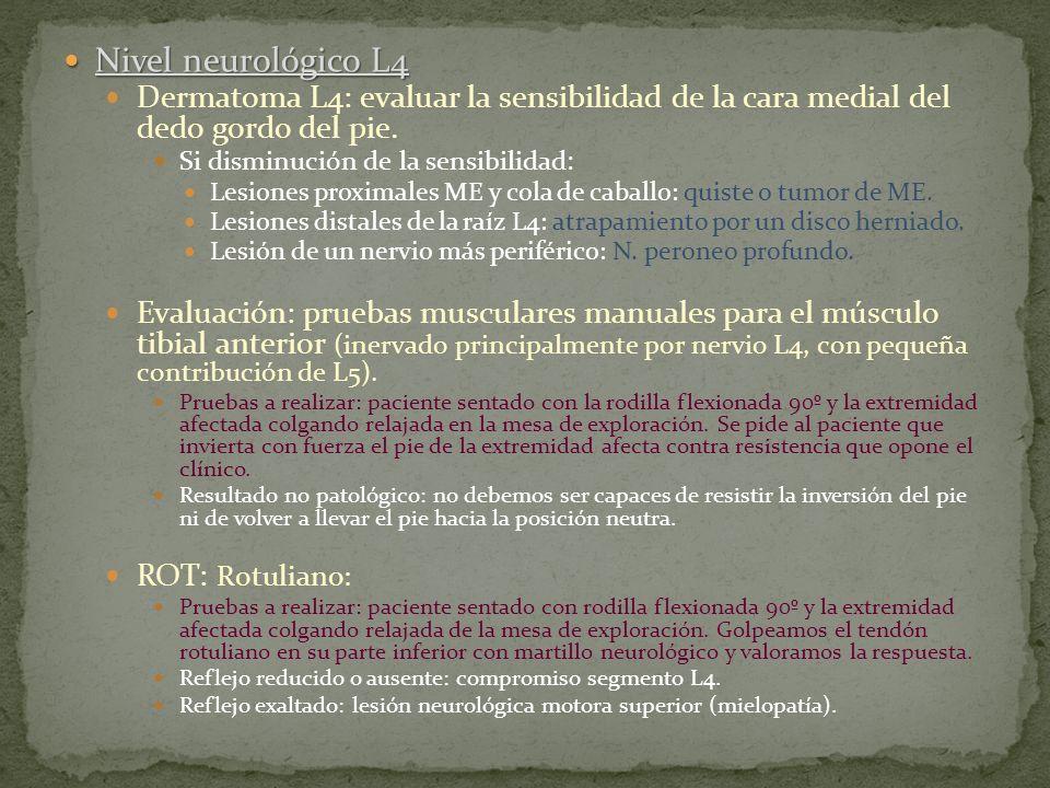 Nivel neurológico L4 Dermatoma L4: evaluar la sensibilidad de la cara medial del dedo gordo del pie.