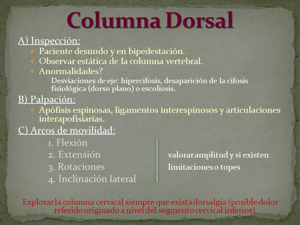 Columna Dorsal A) Inspección: B) Palpación: C) Arcos de movilidad: