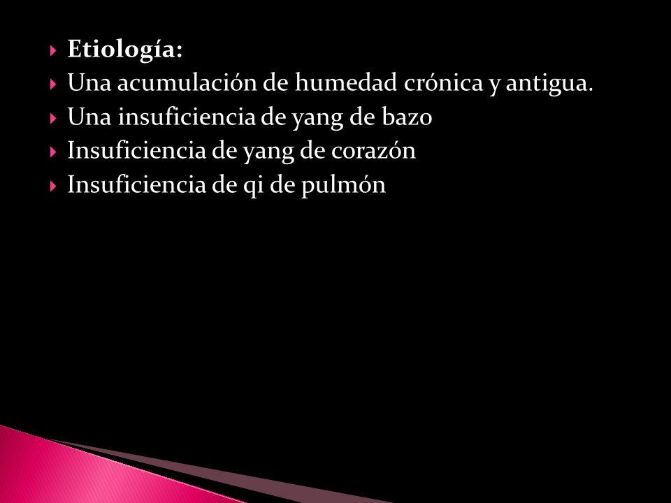 Etiología: Una acumulación de humedad crónica y antigua. Una insuficiencia de yang de bazo. Insuficiencia de yang de corazón.