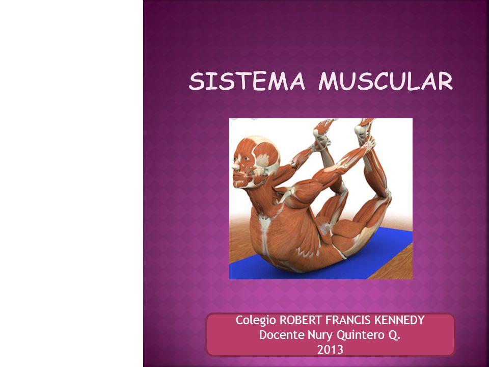 Sistema Muscular Colegio ROBERT FRANCIS KENNEDY