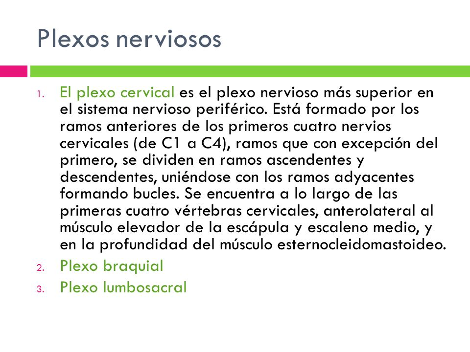Plexos nerviosos