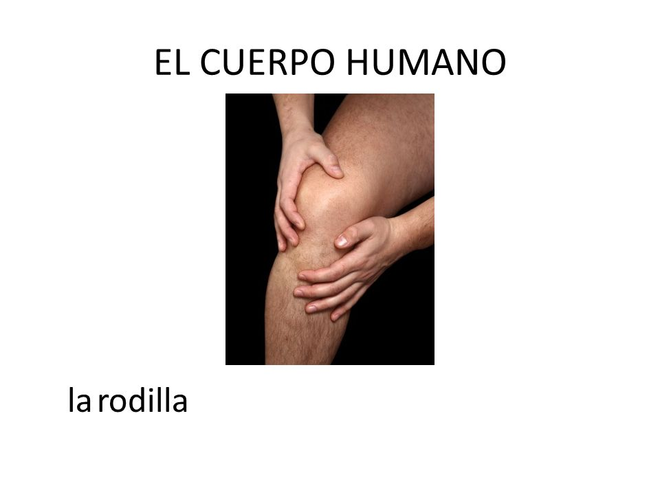 EL CUERPO HUMANO la rodilla
