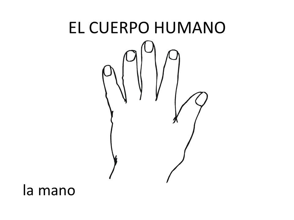 EL CUERPO HUMANO la mano