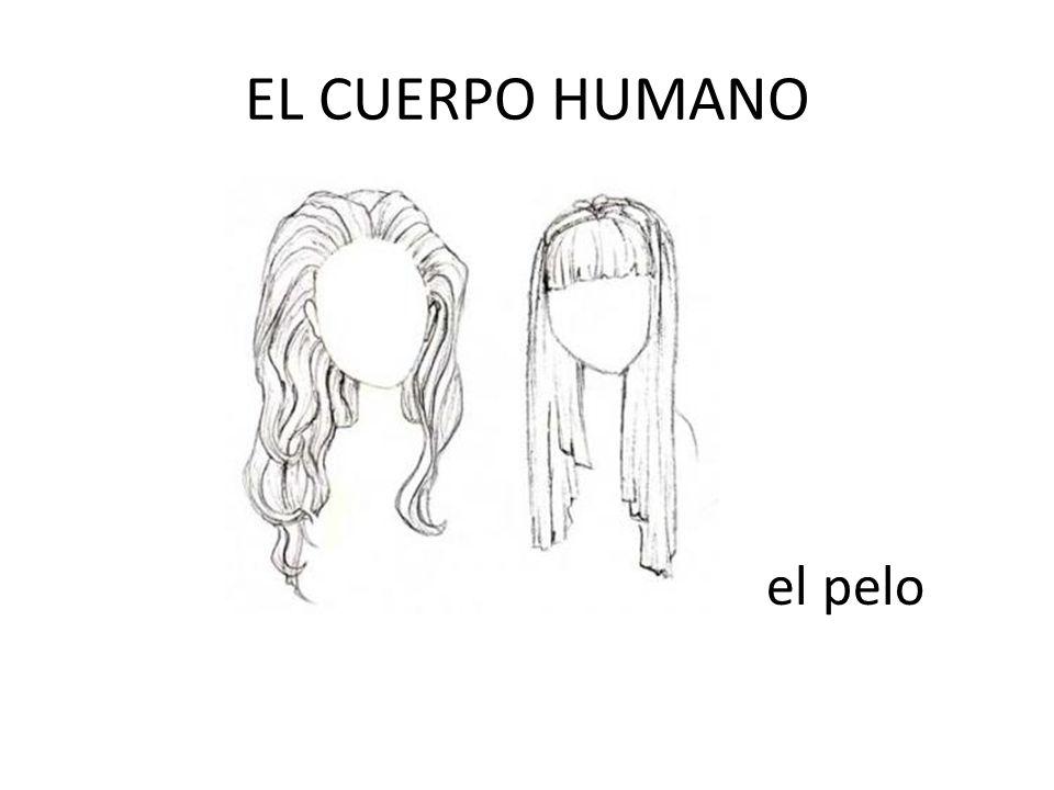 EL CUERPO HUMANO el pelo