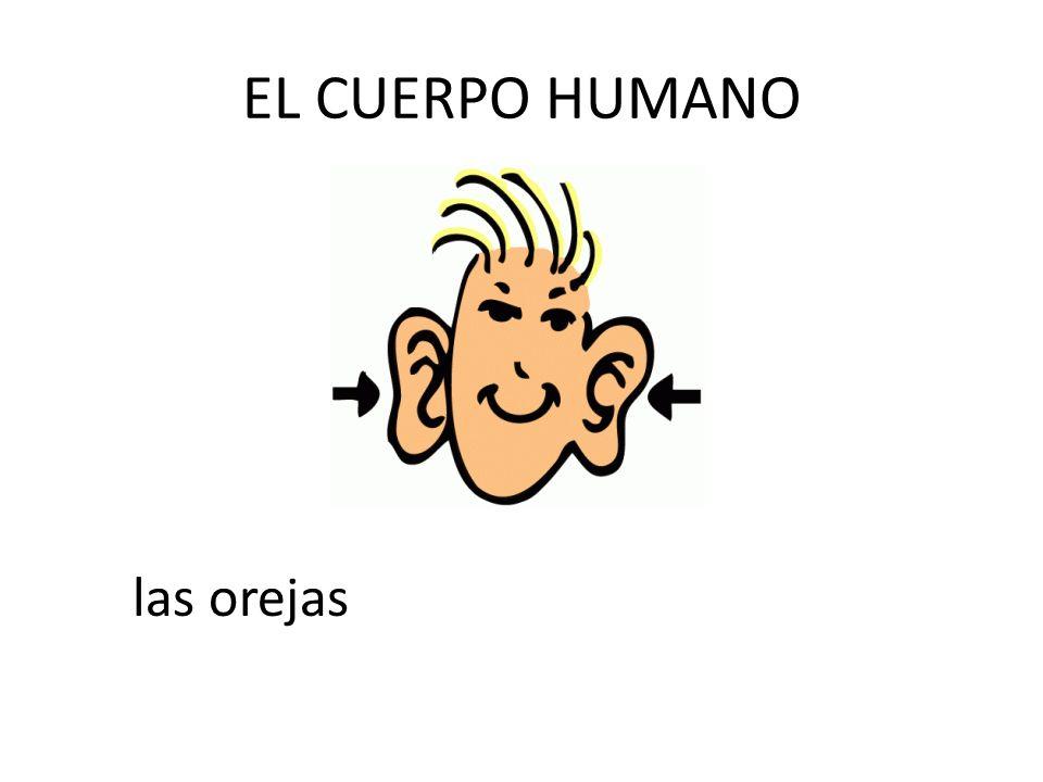 EL CUERPO HUMANO las orejas