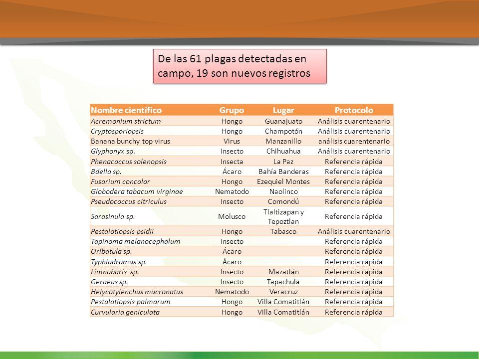 De las 61 plagas detectadas en campo, 19 son nuevos registros