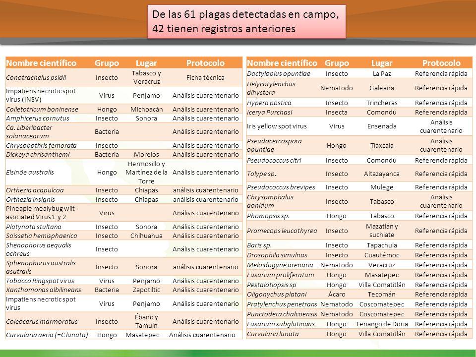 De las 61 plagas detectadas en campo, 42 tienen registros anteriores