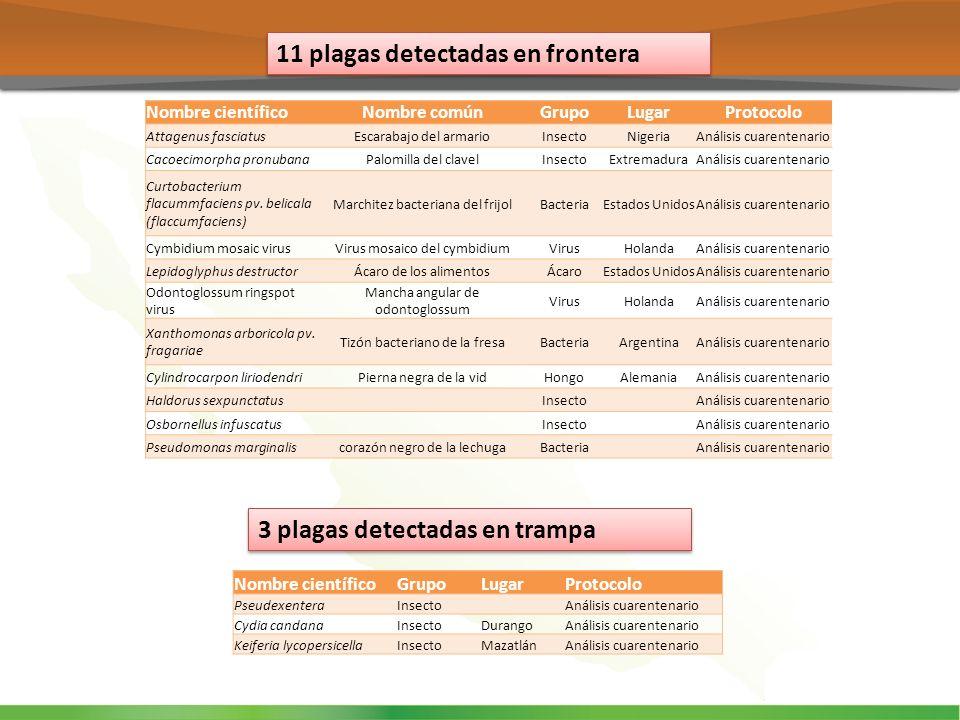 11 plagas detectadas en frontera