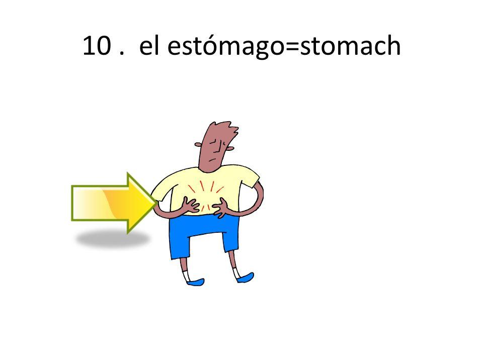 10 . el estómago=stomach