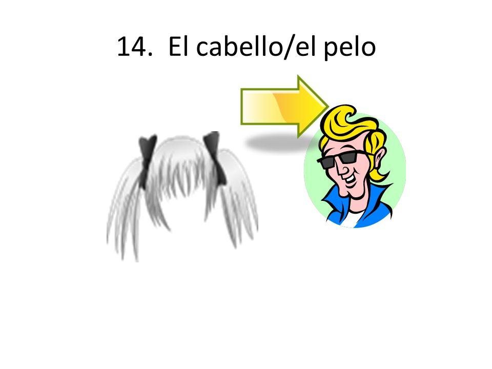 14. El cabello/el pelo