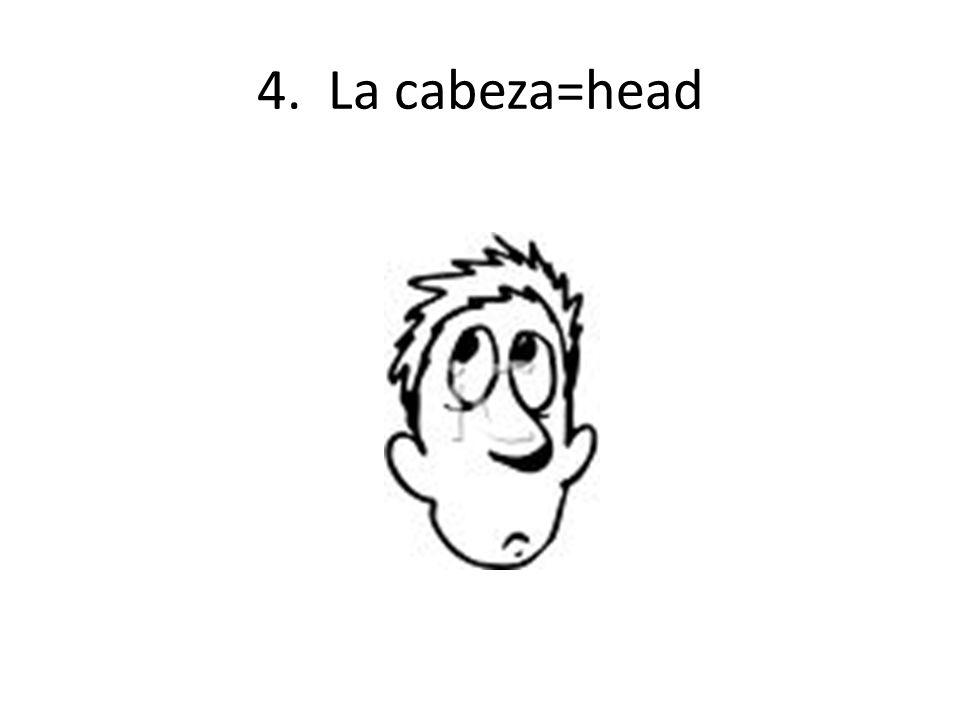 4. La cabeza=head