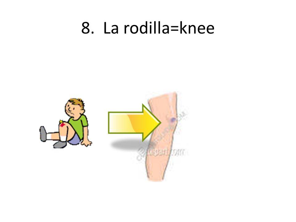 8. La rodilla=knee