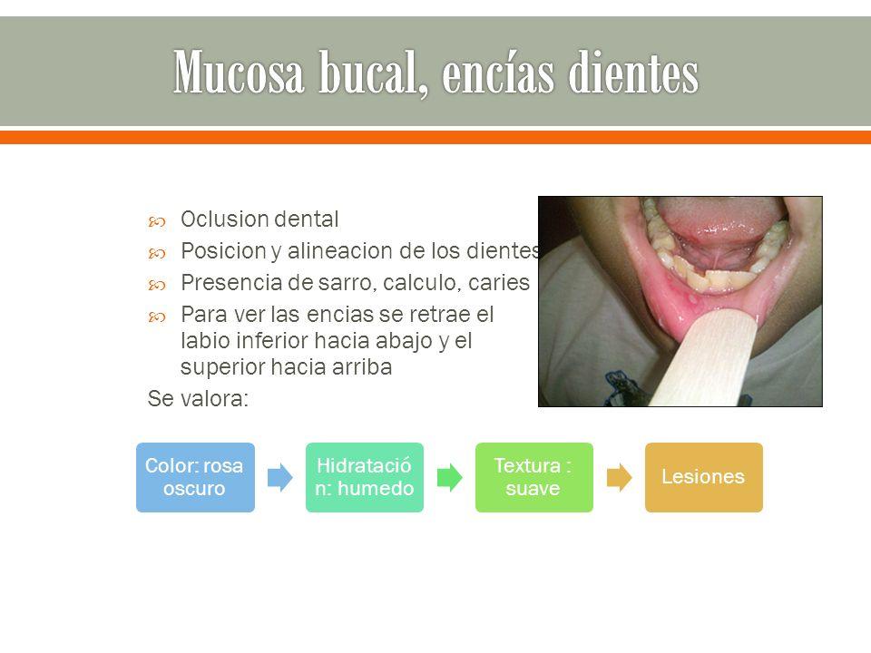 Mucosa bucal, encías dientes