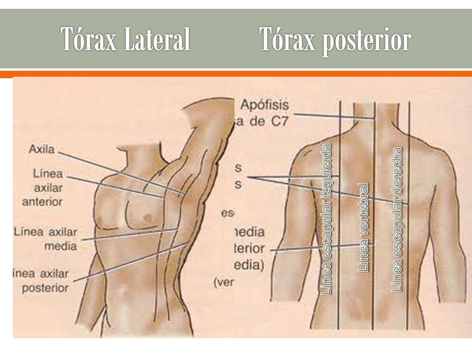 Tórax Lateral Tórax posterior