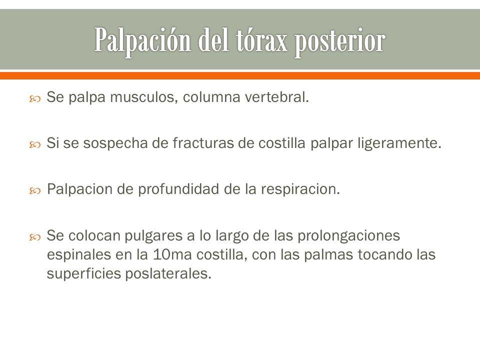Palpación del tórax posterior