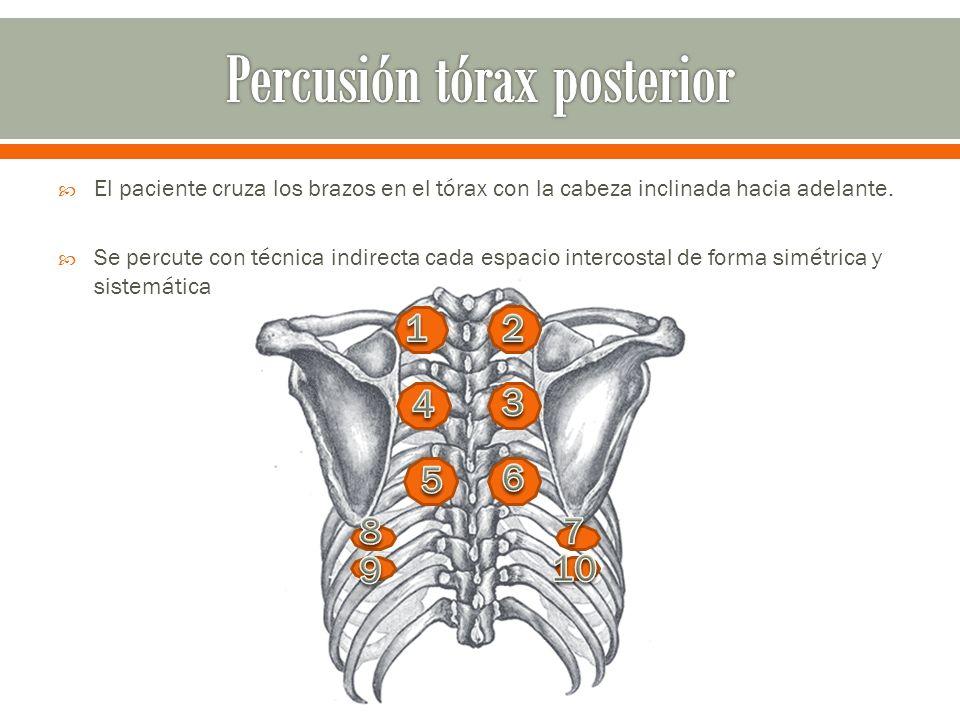 Percusión tórax posterior