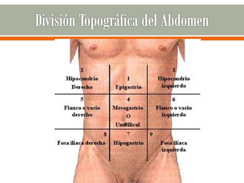 División Topográfica del Abdomen
