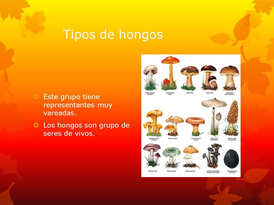 Tipos de hongos Este grupo tiene representantes muy vareadas.