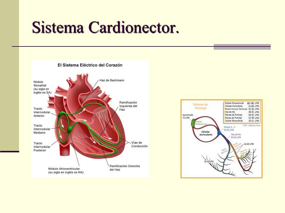 Sistema Cardionector.