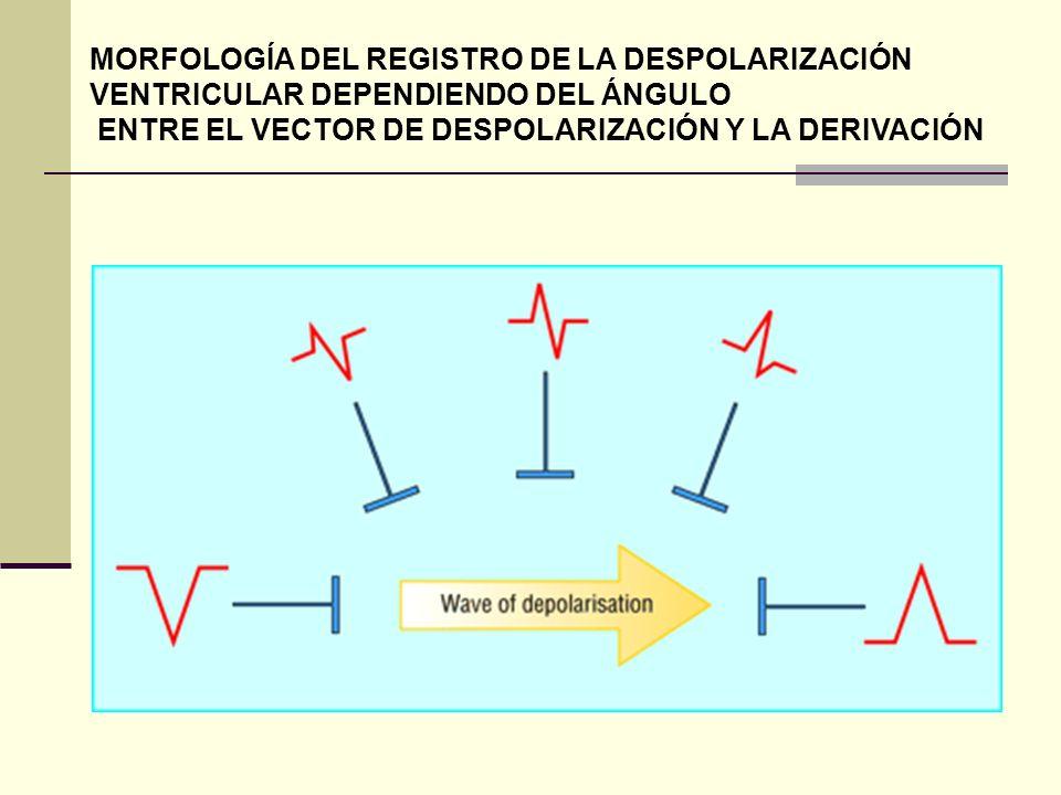 MORFOLOGÍA DEL REGISTRO DE LA DESPOLARIZACIÓN VENTRICULAR DEPENDIENDO DEL ÁNGULO
