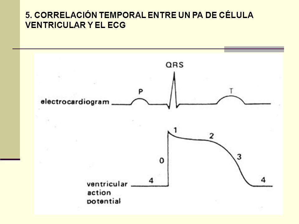 5. CORRELACIÓN TEMPORAL ENTRE UN PA DE CÉLULA VENTRICULAR Y EL ECG