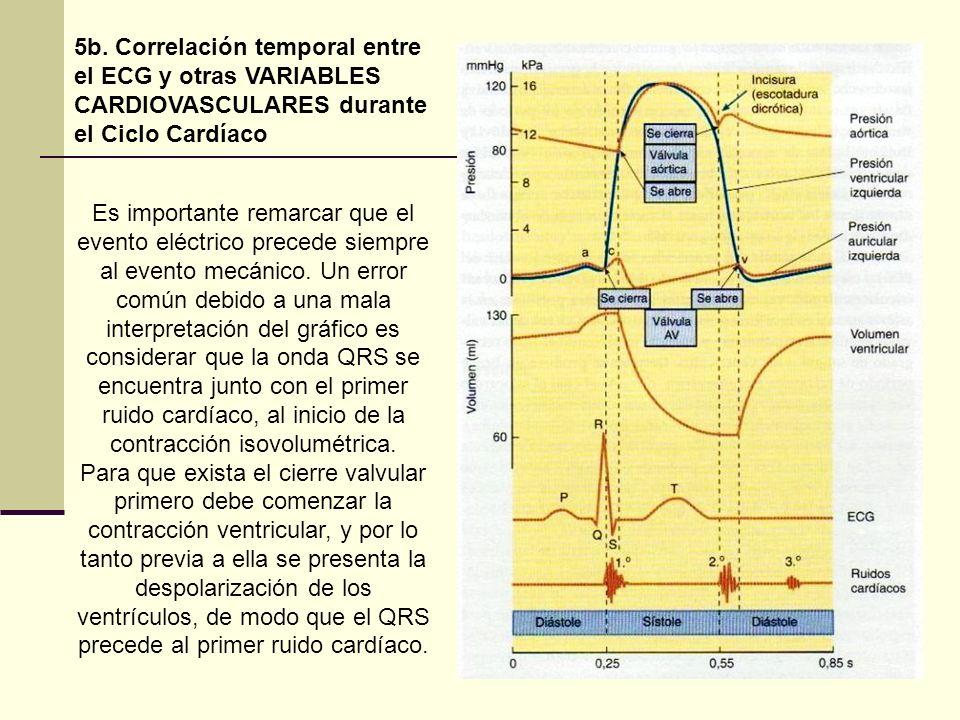 5b. Correlación temporal entre el ECG y otras VARIABLES CARDIOVASCULARES durante el Ciclo Cardíaco