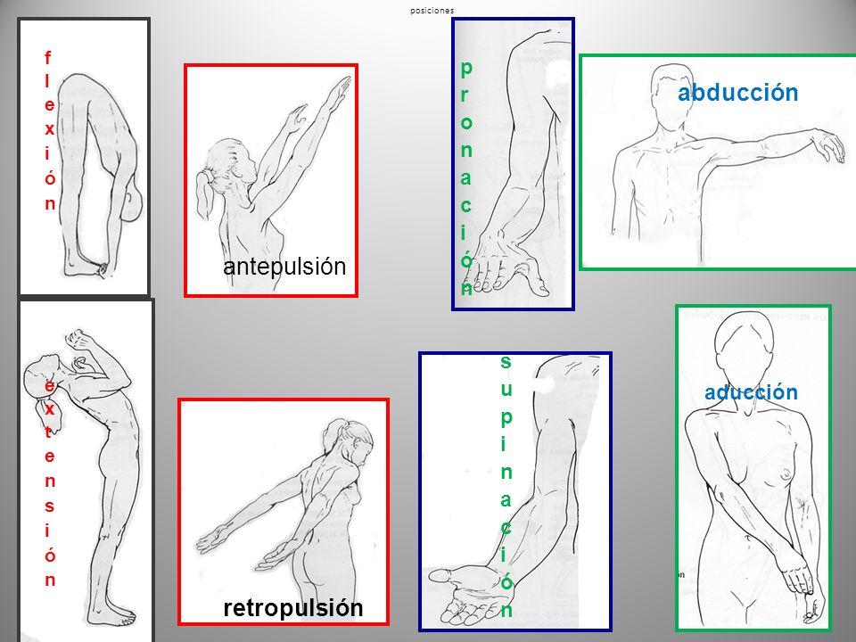 abducción antepulsión retropulsión pronación supinación aducción