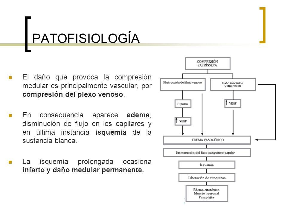 PATOFISIOLOGÍA El daño que provoca la compresión medular es principalmente vascular, por compresión del plexo venoso.