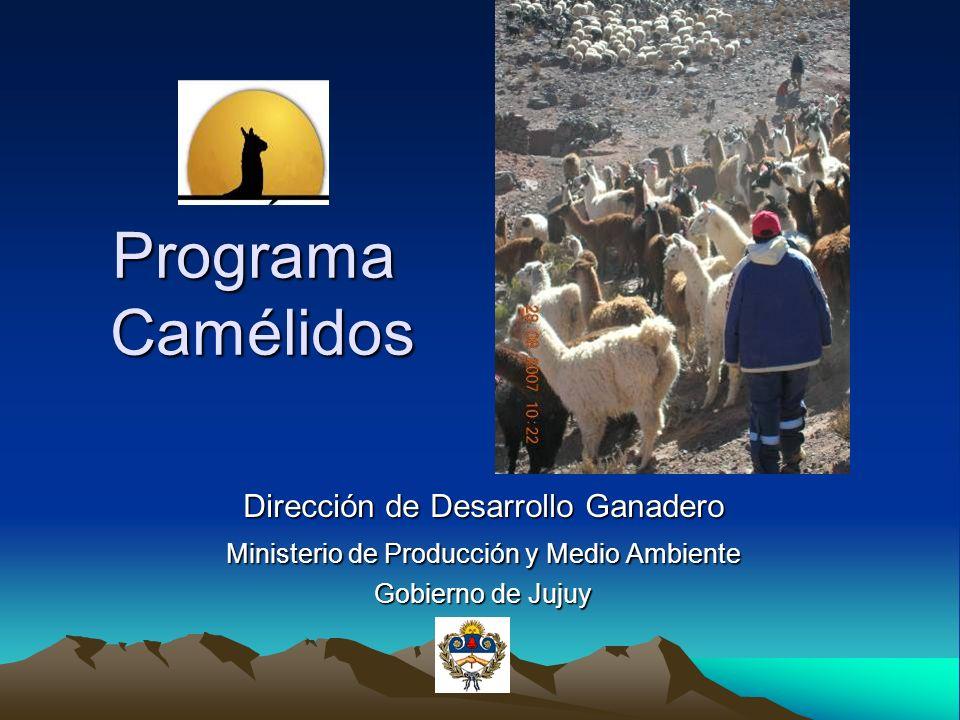 Programa Camélidos Dirección de Desarrollo Ganadero