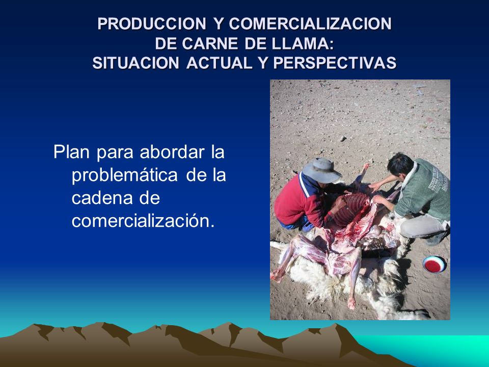 Plan para abordar la problemática de la cadena de comercialización.